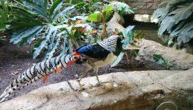 Niagara Bird Kingdom
