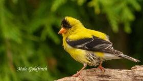 Backyard Bird Photography with Art Ward