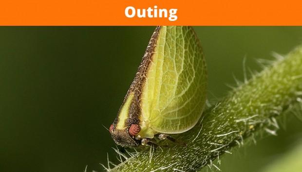 Bug Walk – Gail MacLellan