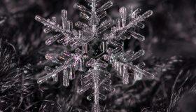 Workshop:  Snowflake Photography