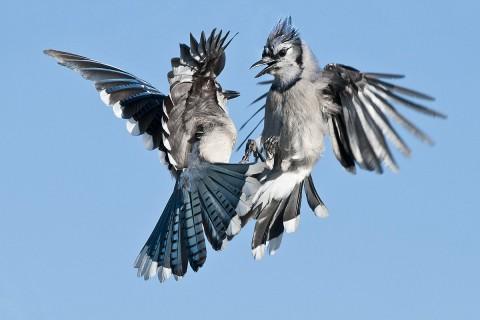Birds in Flight Workshop