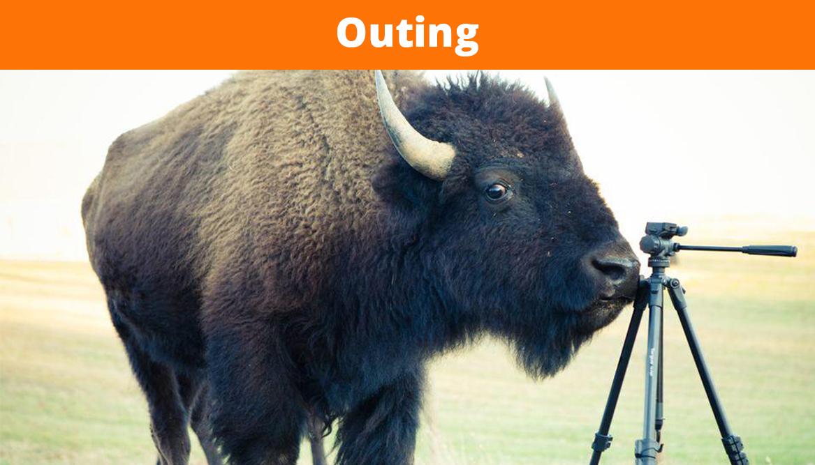 Bison Farm: newborn calves
