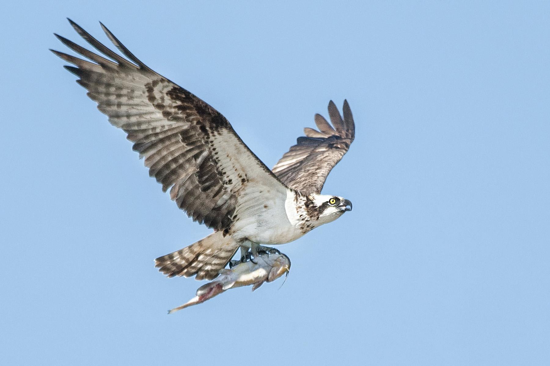 Workshop:  Birds in Flight
