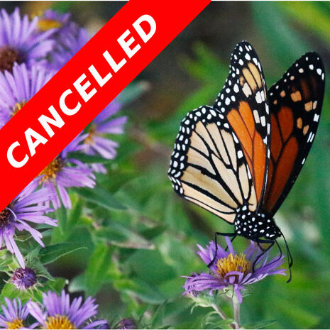 Niagara Butterfly Outing Cancelled