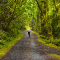 A person walking away from the view down a tree lined gravel road